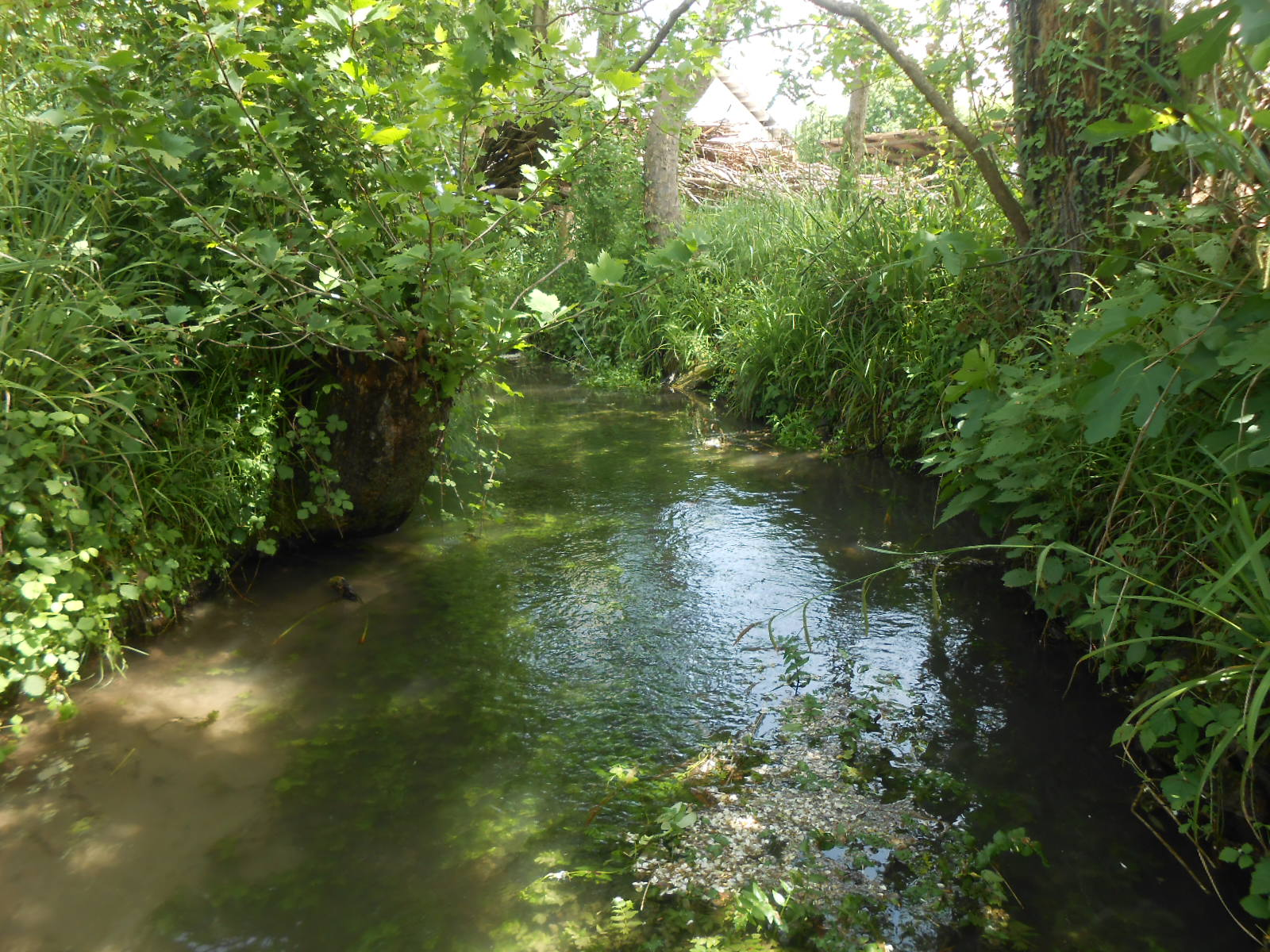 Vegetazione acquatica